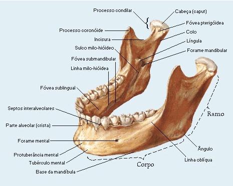 Regiões anatômicas da mandíbula